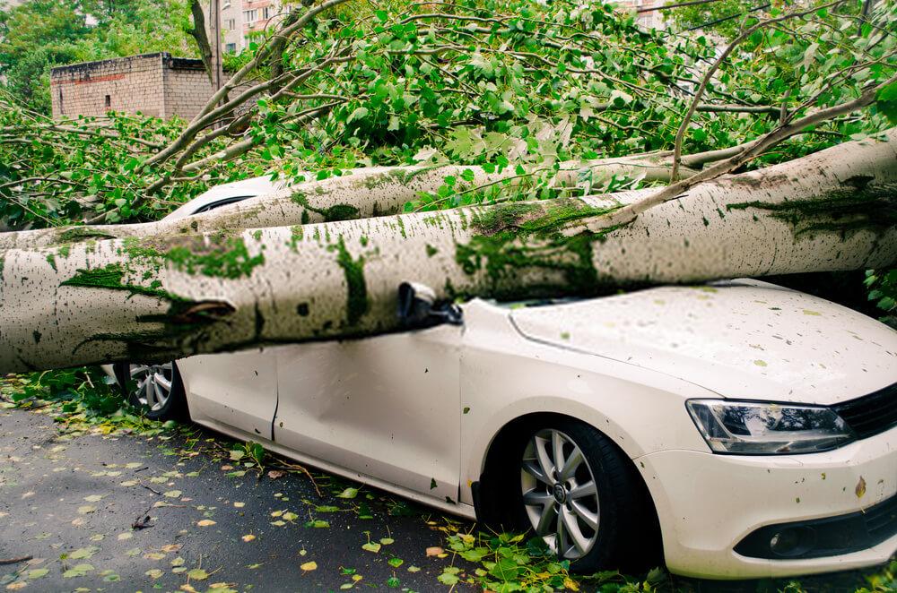 Unfallwagen durch Baumschaden - Autoverschrottung, Autoverwertung, Autoentsorgung deutschlandweit